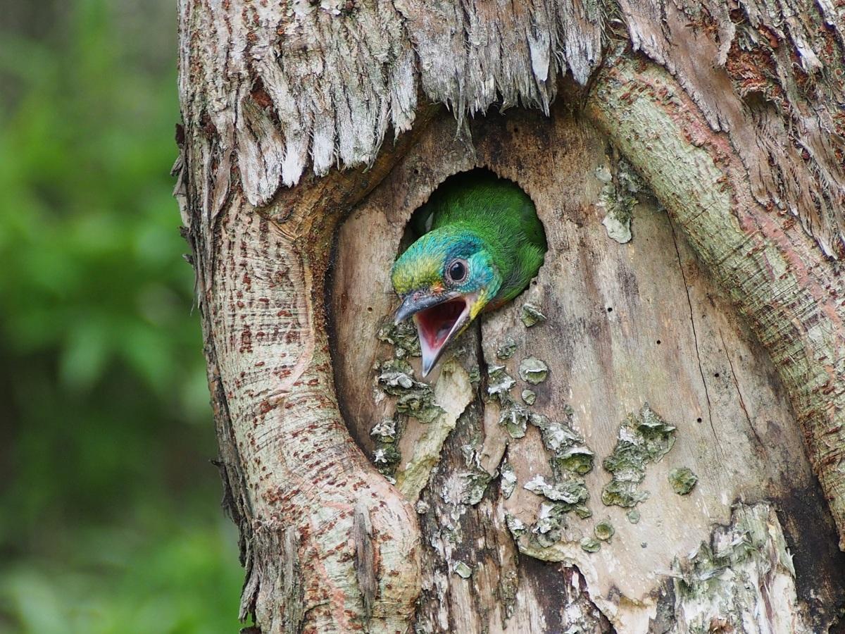 拟啄木鸟图片